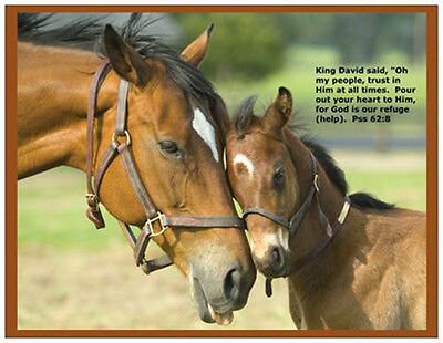 New Christian Loving Horse with Foal Fridge Magnet, Great Gift, Free Postage