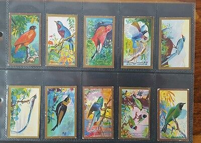 Foreign Birds Set Of 25 Cigarette Cards 1926 Cavanders