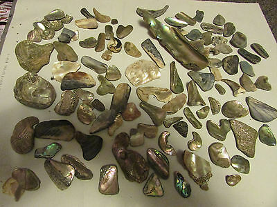 Huge lot Natural ABALONE Mother of Pearl SHELLS and Pieces-jewelry,craft making