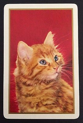 Vintage Swap/Playing Card - BEAUTIFUL GINGER CAT - Mint Cond