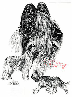 Briard Composite Limited Edition Print by Lyn St.Clair