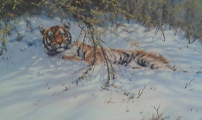 Tony Forrest: Framed limited edition print of a Siberian Tiger in the snow.