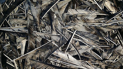 "36 x 4"" Shield camo BLACK Feathers for traditional arrows / longbow / archery"