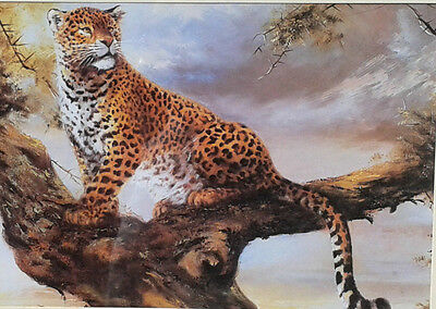 Framed print of a Leopard sitting in a tree.
