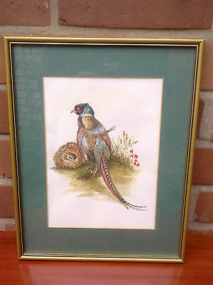 Pair of pheasants.  Watercolour by  Morison Inches