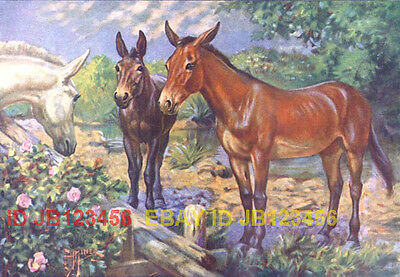 Mule, Lovely 80+ Year Old Antique Print FARM LIFE