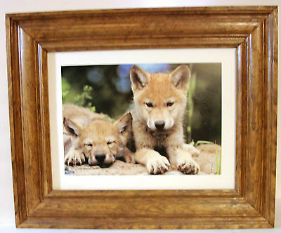 """Solid Wood Frame  Wolf Pups Print Dogs Wolves Wildlife Wall Art Decor 16 7/8"""""""