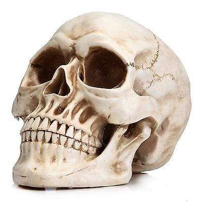 Readaeer Life Size Replica Realistic Human Skull Gothic Halloween Decoration ...