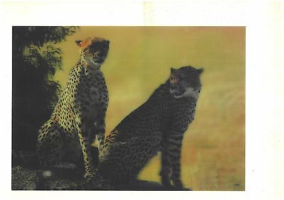 animal photography 3D Lenticular Holographic Stereoscopic Picture Wall Art