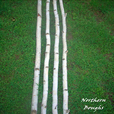 4 Medium White Birch Poles 8'