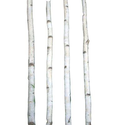 4 Thin White Birch Poles 6'