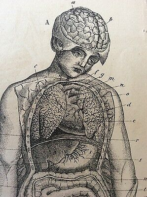 Antique Medical Dissection BRAIN Anatomy Macabre Bookplate