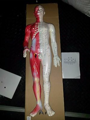 Human Body Model For Both Meridian And Extraordinary Points Of China 60 cm