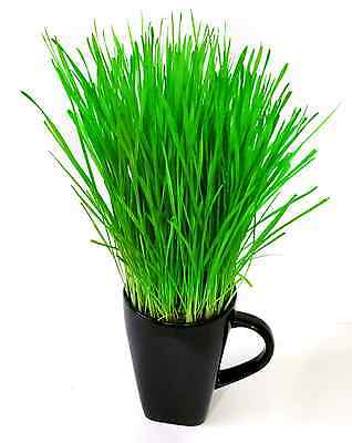 Cat Grass Refill x 2 kit - Easy Grow your own Wheat Seed - Indoor Kitty Grass