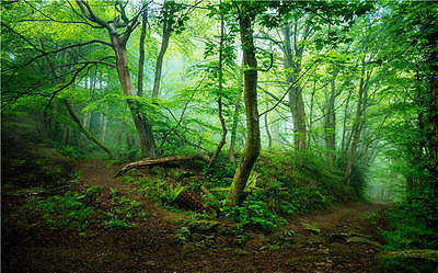 Spring Woodland Magic Forest Full Wall Mural Photo Wallpaper Print Home 3D Decal