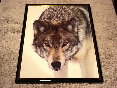 WOLF 8X10 FRAMED PICTURE #3 ( poster )