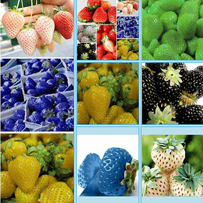 100PCS Strawberry Seeds Nutritious Fruit Vegetables Plant Seed Garden Court Good