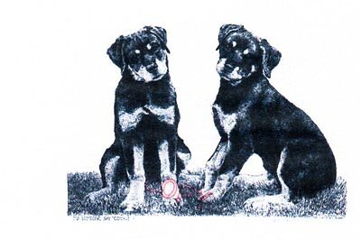 Rotweiller Limited Edition Print by Lyn St.Clair