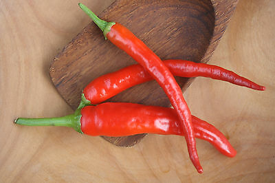 Spicy Acres Red Cayenne Pepper Seeds Organic Non-GMO