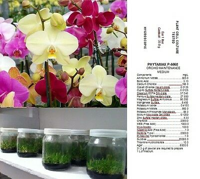 TERRENO NUTRITIVO x SEMINA ORCHIDEE PHYTAMAX P 6668 ORCHIDS ORCHID SEED SEEDS