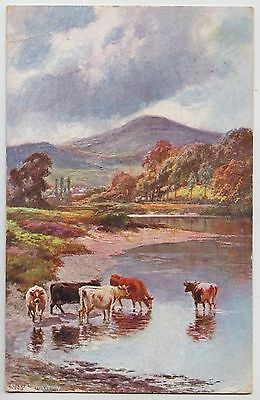 """POSTCARD - artist drawn, cows cattle in river """"Views of Abergavenny"""" Wales"""