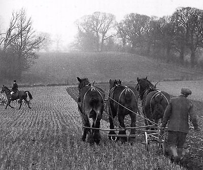 Plough Team & South Berkshire Hunt At Ufton 1935 Vintage Mounted Print Farming