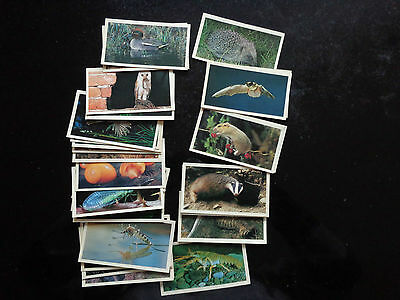 Grandee Britain's Nocturnal Wildlife Cards Complete Series 1 - 30