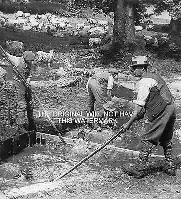 Sheep Washing In The Kennet Ramsbury Wilts 1935 Vintage Mounted Print Farming