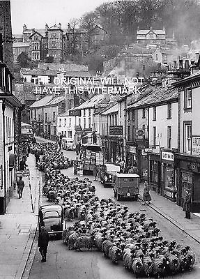 Upper Wensleydale Sheep Driven Through Kendal 1946 Vintage Mounted Print Farming
