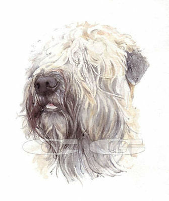 SOFT COATED WHEATEN TERRIER.      3 Blank Dog cards by Christine Groves