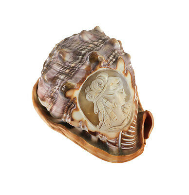 Hand Carved Cameo on Cassis Rufa Conch Shell striated seashell.