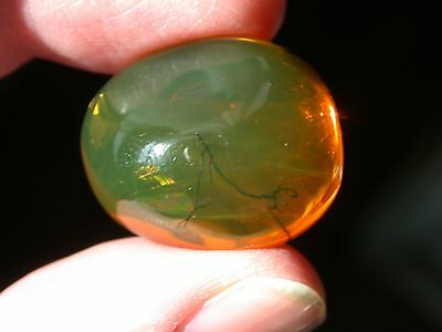 Large Beautiful GREEN Authentic Dominican Amber GEM with RARE Botanical Tendrils