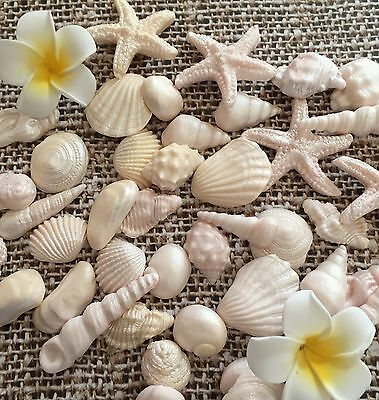 20x SEA SHELLS  edible  Natural shimmer cake cupcake toppers wedding