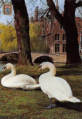 Belgium Brugge Omgeving Begijnhof Near the Beguinage Bridge Birds