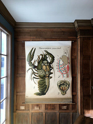 Antique Pull Down Chart, Crayfish Chart, Pfurtscheller's Zoological Wall Chart