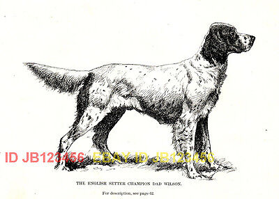 DOG English Setter Named, Llewellin Llewellyn Setter, 1890s Antique Print