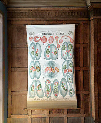 Antique Pull Down Chart Infusoria Biological School Chart, Remy Perrier & Cepede