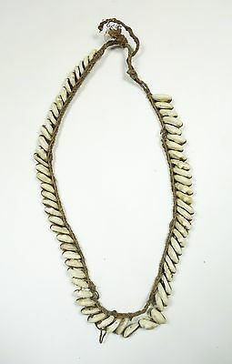 Old New Guinea Shell and Bush String Necklace