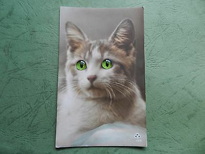Old Postcard - Cat With Glass Eyes