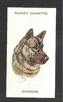 ELKHOUND Scandinavian abundantly coated and extremely hardy 1930's print card