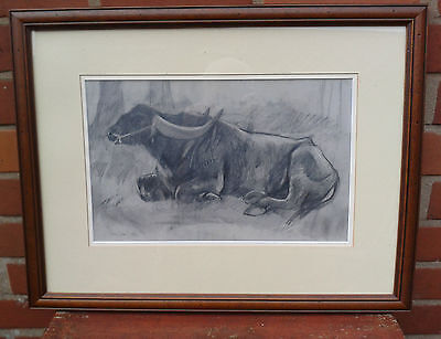 Lilian Shaw. Framed and signed pencil drawing of a Water Buffalo, 1993