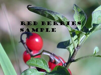Red Berries Digital Photo E-Mail Free Shipping auto Positive
