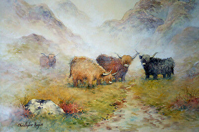 Highland Cattle.Scotland.Picture