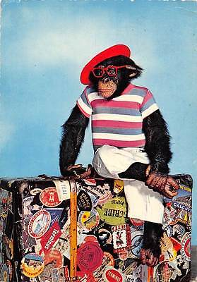 Fashion Monkey Chimpanzee, Hipster Red Glasses, Beret Hat, Fancy Clothing