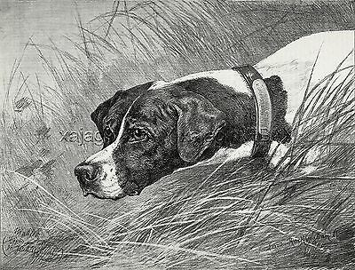 Dog Pointer Portrait (Named) Pointing by Mahler, Large 1880s Antique Print