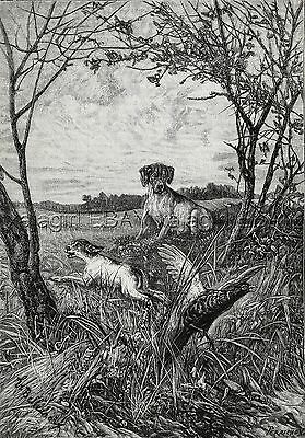 Dog Pointer Puppy Scared By Pheasant, Mother Watches, Large 1880s Antique Print