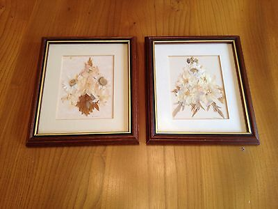 2 X Anne Cawthorne Dry Flowers Framed Pictures