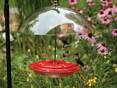 Hummingbird Feeder With Protective Dome - Last One