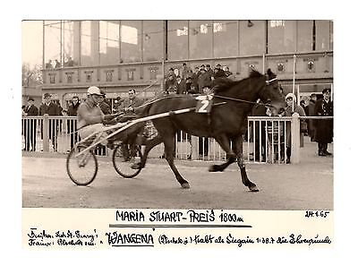Original Press Photo Harness Trotting Racing Wangena 24.1.1965 (2)