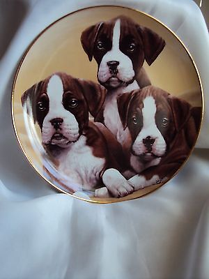 Boxer Puppies Dog Collection Plate Danbury Mint Simon Mendez (Three Of A Kind )